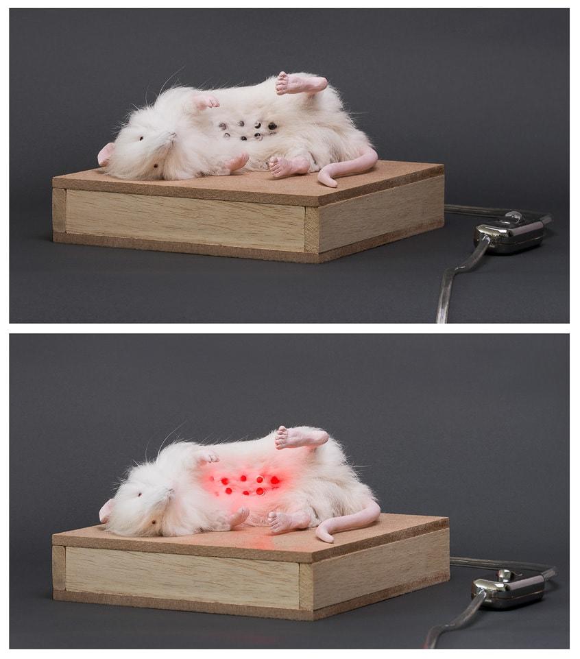 sculpture de rat. Sculpture de Katarina Kudelova